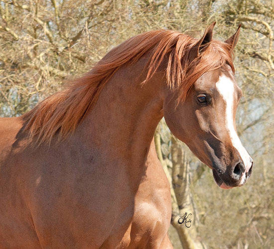Jagger as a yearling