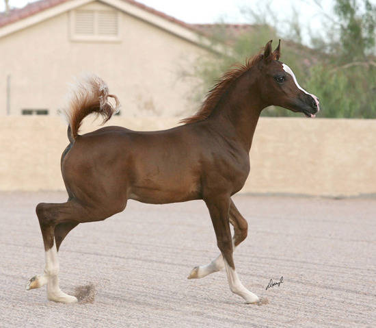 Jagger as a weanling