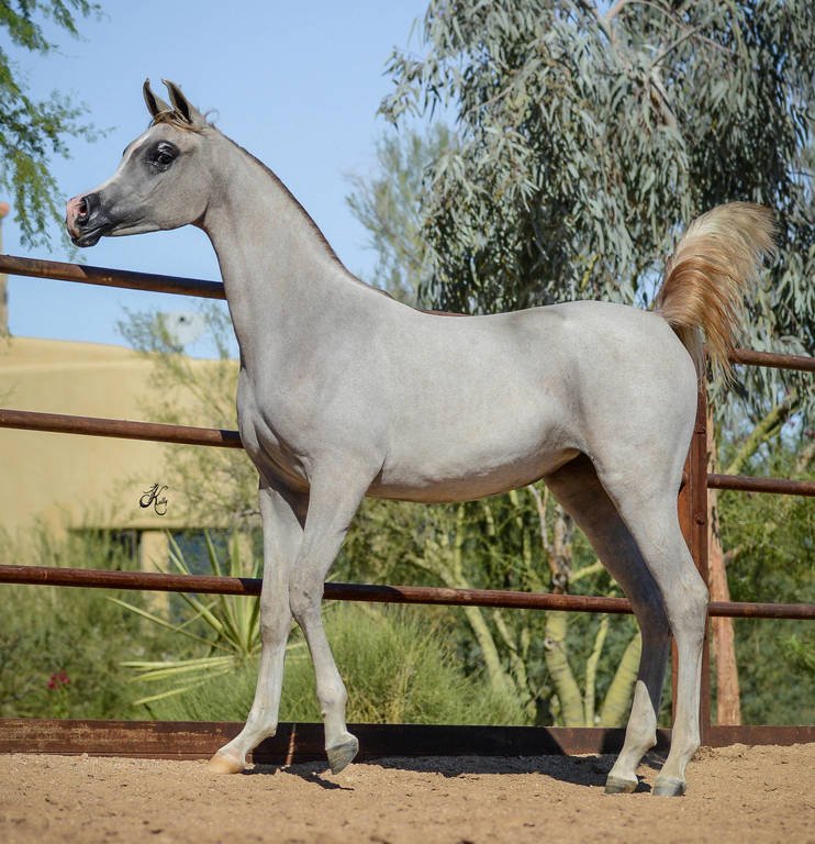 Serena SWF as a yearling