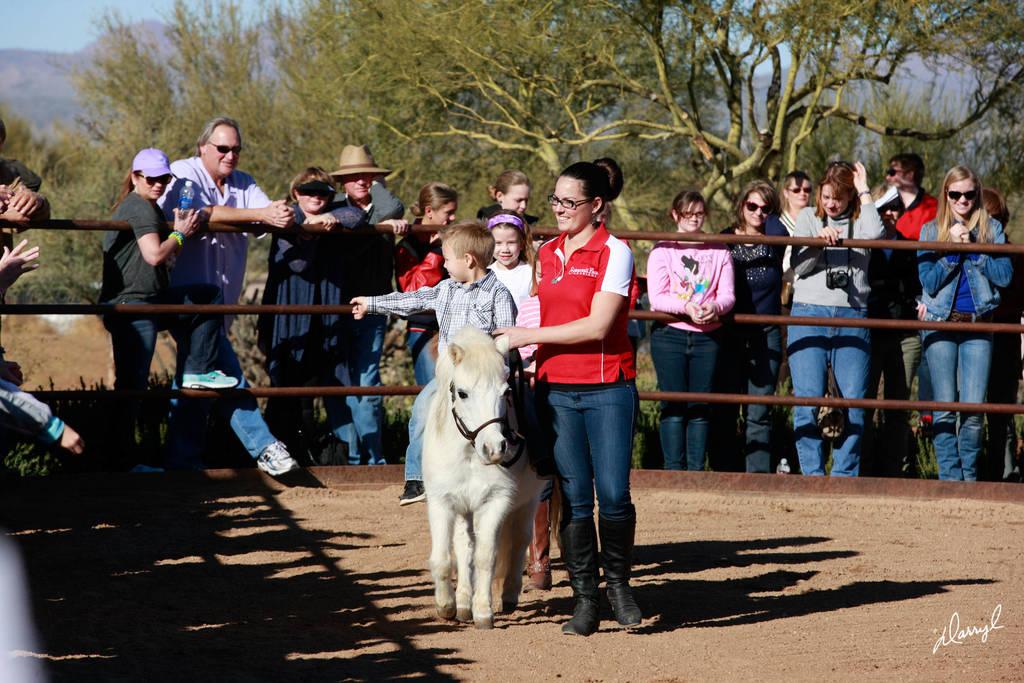2013 Arabhorse Farm Tours