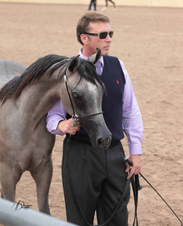 David showing a wonderful colt for Dr Harris