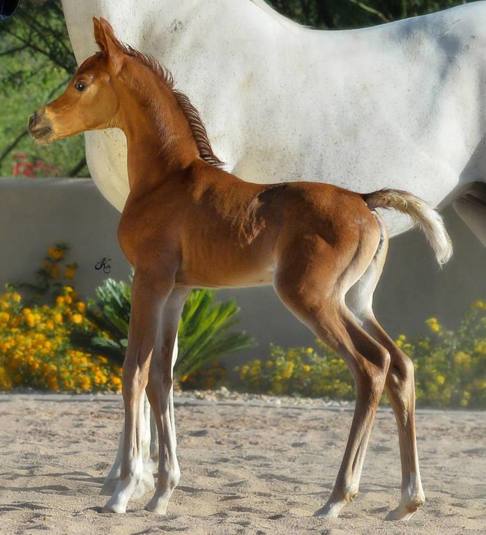 Basma at two weeks of age