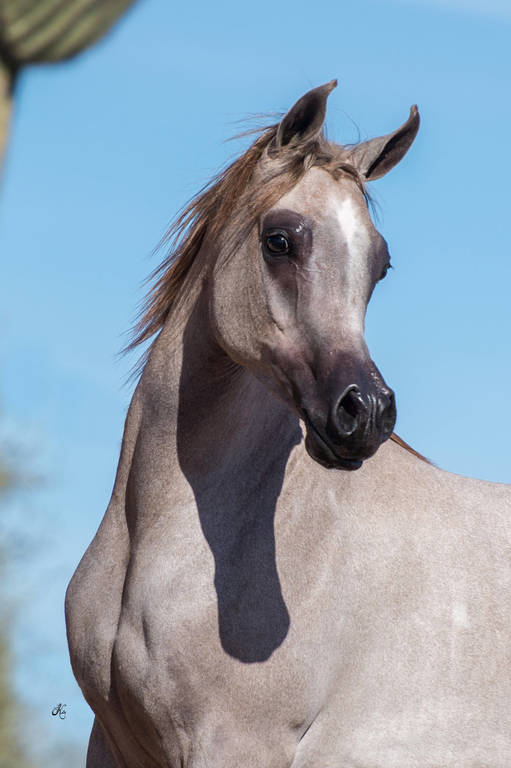 Arianna as a yearling