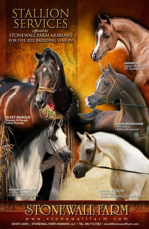 Stallion services