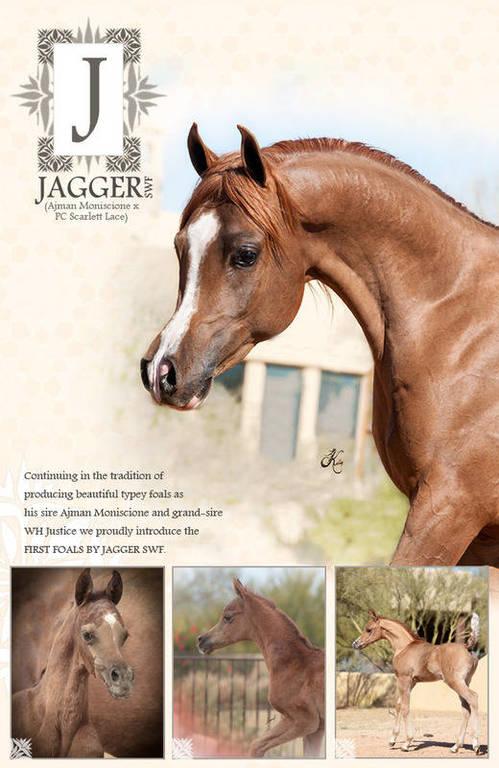 Jagger SWF