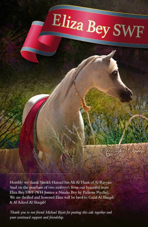 Congratulations Al Shaqab