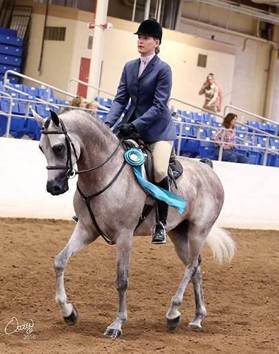 Gazee under saddle