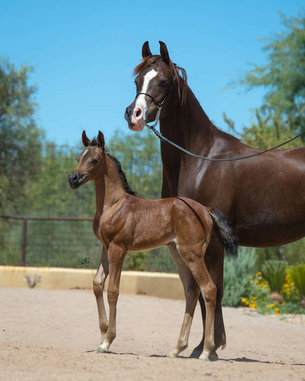 Penelope Bey and her 2017 filly by Kavalle MI