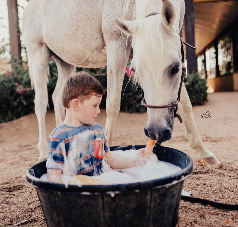 Bath time with Vona and her boys! :: Arabian Horses of Stonewall Farm