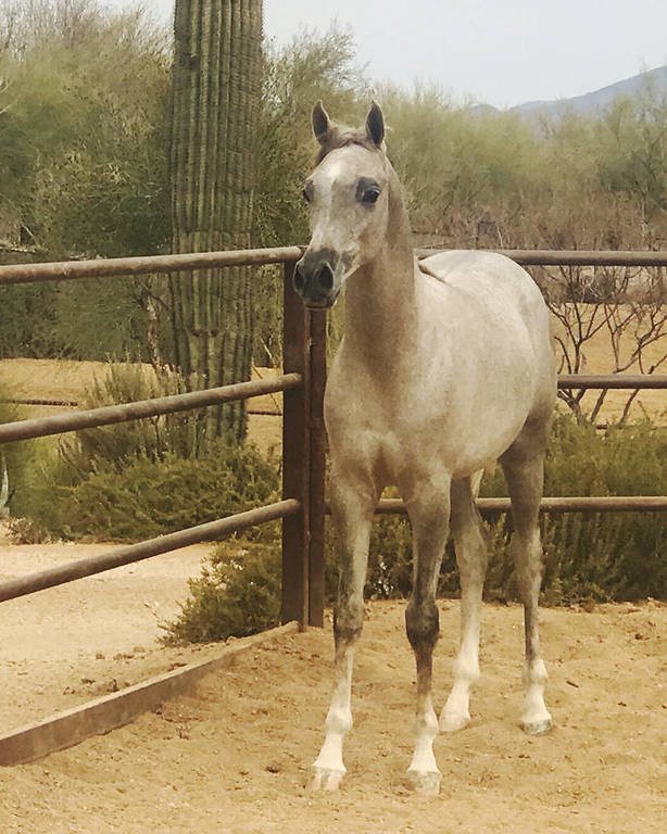 Apalonian SWF as a yearling