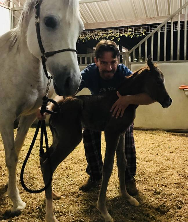 2018 New Foals - Amateur pictures