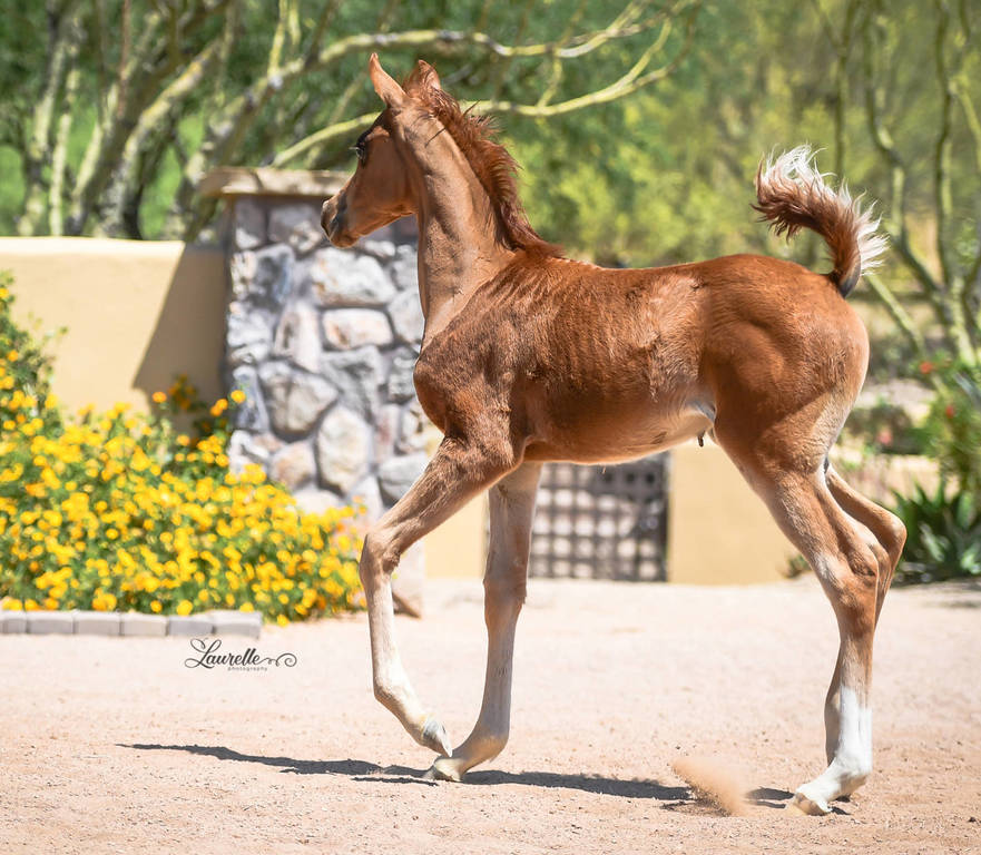 Kassiopeia SWF - three months old