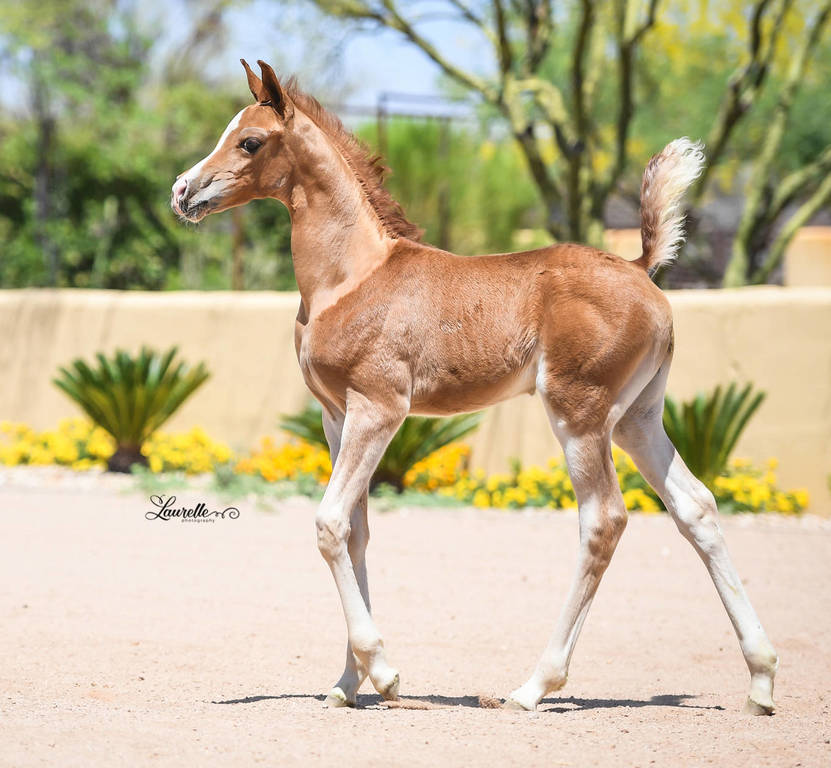 Eternalove SWF at six weeks of age