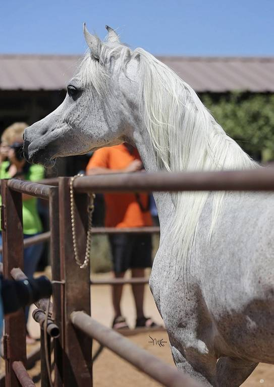 Khaleesi as a five-year-old mare