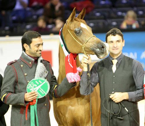 Sheikh Ammar, Kwestura and her handler Frank