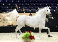 Paris - Salon Du Cheval Show