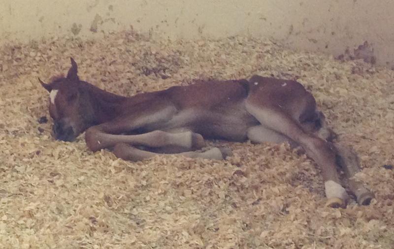 Newborn horse standing - photo#14