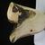 IMG_5907: Black Walnut Crotch Vase
