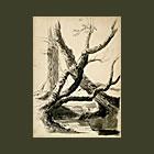 Sketch of Tree Trunks