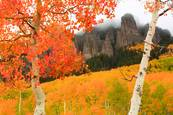 Autumn_glory