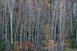 Amongst_trees