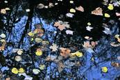 Autumn_reflections_2