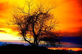 Naked_tree