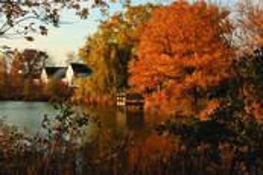 Suburban_wetland