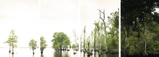 River_trees