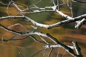 Branch_reflection