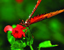 Butterfly__5