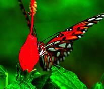 Butterfly__6