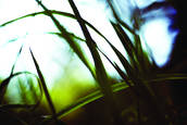 Autumn_grasses