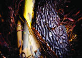 Kelp_abstract_1