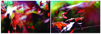 Maple_leaves_diptych_1