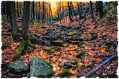 Creekbed_in_autumn_repose
