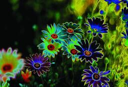 Dark_daisies