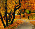 Yellow_autumn