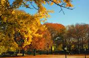 1a_a_walk_in_the_park_-_early_fall