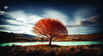Flaming_tree