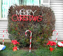 Merry_christmas_bush