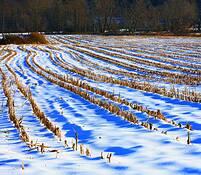 Snow_field