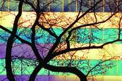 Tree windows