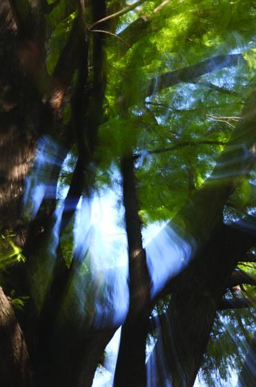 Tree_burst