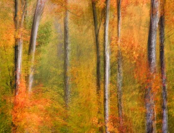 Autumn_forest