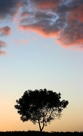 Lone_tree_at_sunset