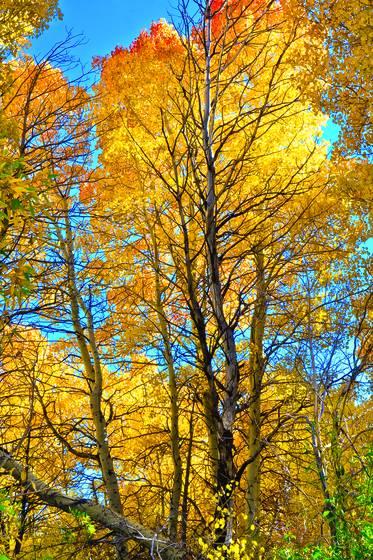 Fall_glory