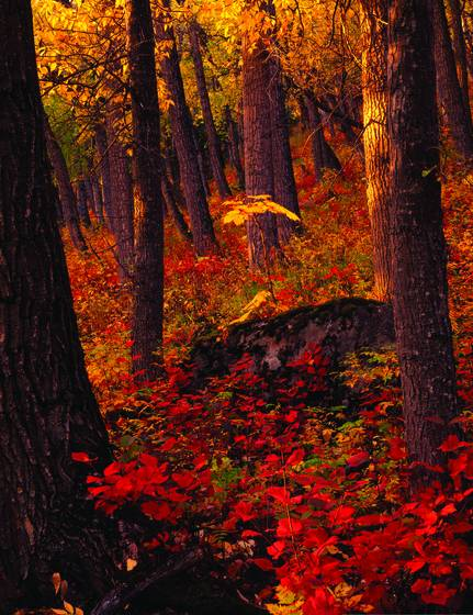 Autumn_light_in_the_forest