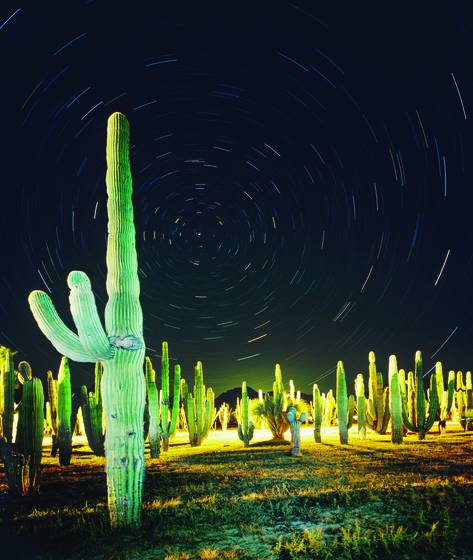 Cactus_and_stars