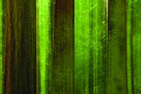 Redwood_maze